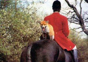 fox on horse