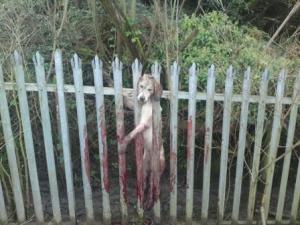 Impaled Hound