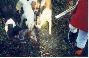 Red coat & dead fox
