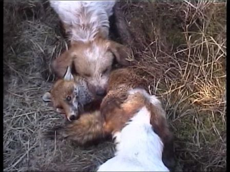 an introduction to the cruelty of the hunting Sport hunting has become one of the most popular forms of hunting  its positive  attributes, but anti-hunting organizations see it as cruel treatment of animals.