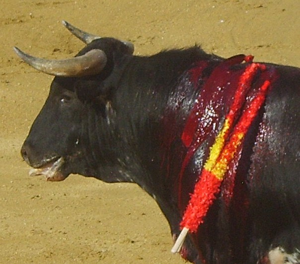 Spain is complicit in child neglect by allowing child matadors